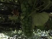収穫(その1)