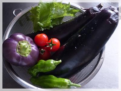 家庭菜園2015年8月28日