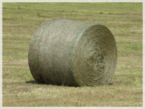 牧草ロール2015年9月1