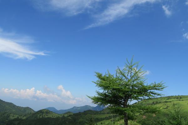 高原の落葉松