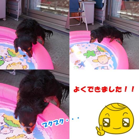 cats3_20150830155133ff8.jpg