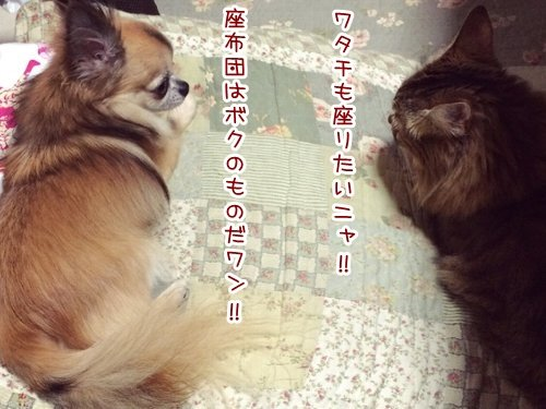 IMG_6411_001.jpg