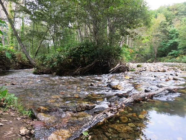 ドロームキャンプフィールド 白井川