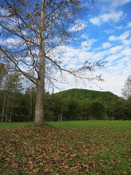 ドロームキャンプフィールド 木立 青空