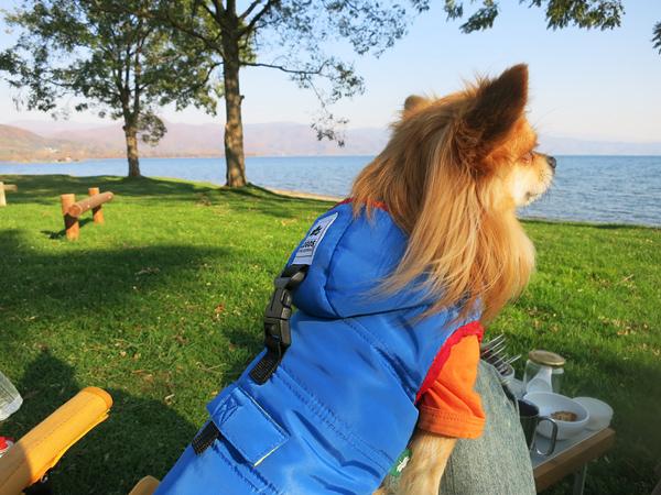 曙湖畔 茶太郎 ロゴスジャケット
