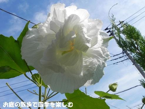 suihuyou10_20150912191056efa.jpg