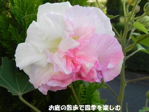 suihuyou11_2015091219105815f.jpg