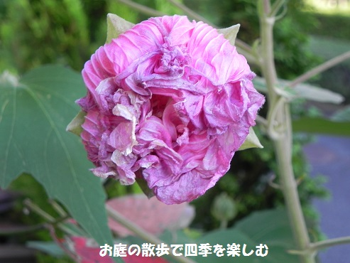 suihuyou12_201509121910597e3.jpg