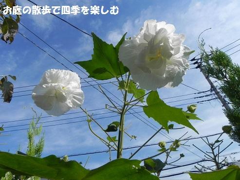suihuyou9_20150912191055b78.jpg