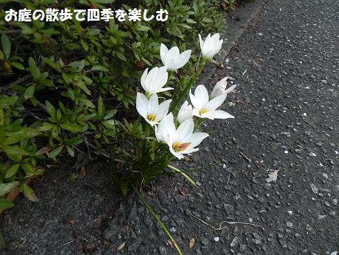 tamasudare2.jpg