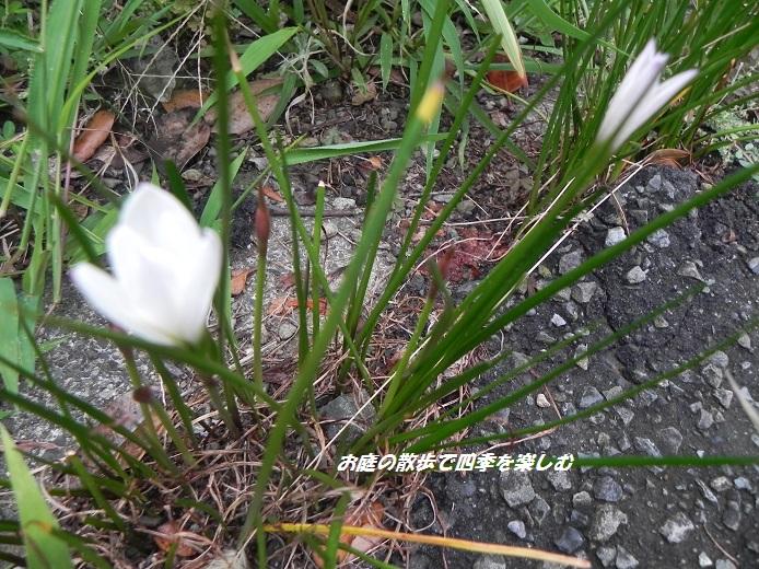 tamasudare_2015091005222111e.jpg