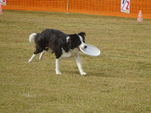 DISC DOG GAME