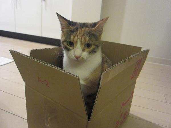 箱入り小都ちゃん2