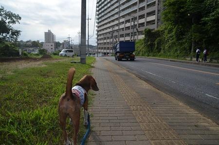 20150825佐倉城址公園03