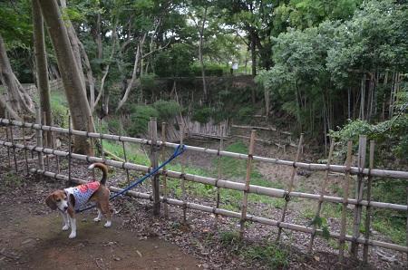 20150825佐倉城址公園12
