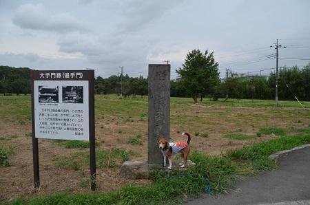 20150825佐倉城址公園27