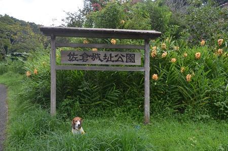 20150901佐倉城址公園03