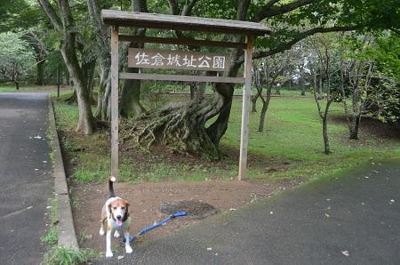 20150901佐倉城址公園39