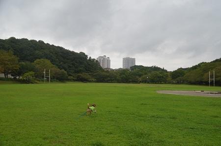 20150907上座公園10
