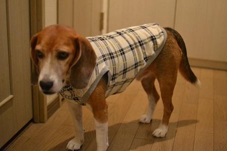 20150908犬服23作目24