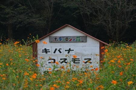 20150912ポディロンの森04