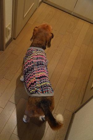 20150913犬服24作目25