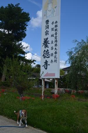 20150921手賀小学校発祥の地02