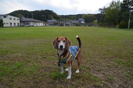 20150921太田小学校20