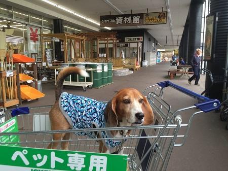 20150925びいすけと買い物03