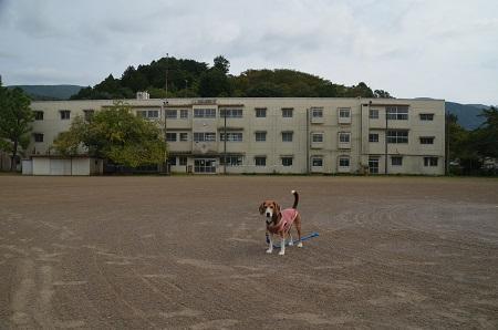 20150930湯ケ島小学校15
