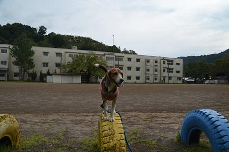 20150930湯ケ島小学校20