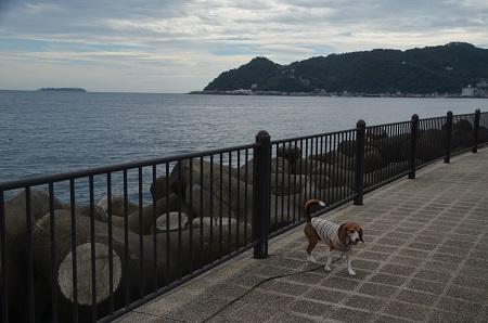 20151002長浜海浜公園11