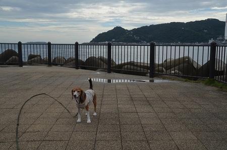 20151002長浜海浜公園13