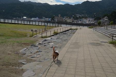 20151002長浜海浜公園19
