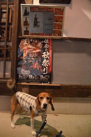 20151009佐倉の秋祭り①11