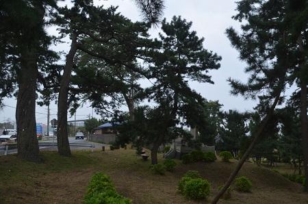 20151010甚兵衛公園のコスモス20