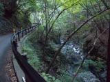 川乗林道を進む