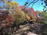 川苔山の紅葉