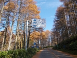 道路沿いのカラマツ林
