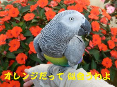 8_オレンジ