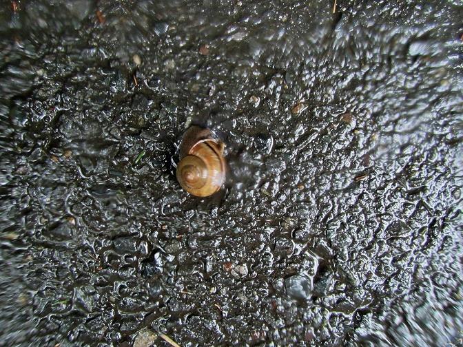 3 15.8.26 雨の中の散歩ほかブログ用 (36)