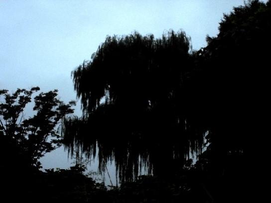 15.9.26 散歩、片付けは拓本とカメラ類の処分 (6)