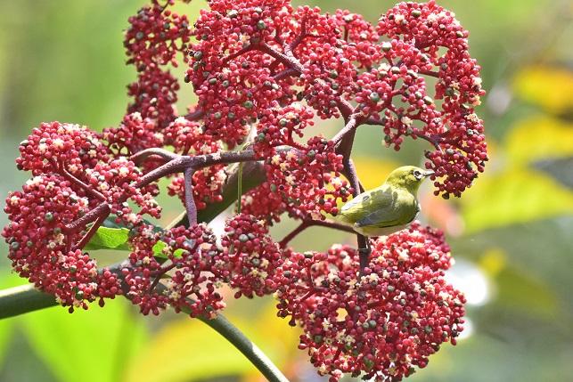 ユニークな植物たち(3)