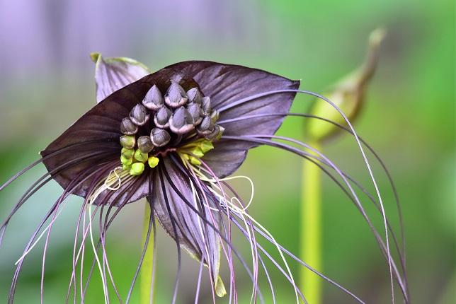 ユニークな植物たち(4)
