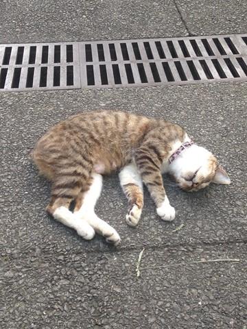 野性を忘れた猫たち (6) (コピー)