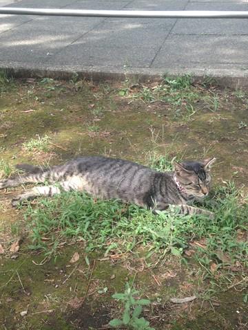 野性を忘れた猫たち (16) (コピー)
