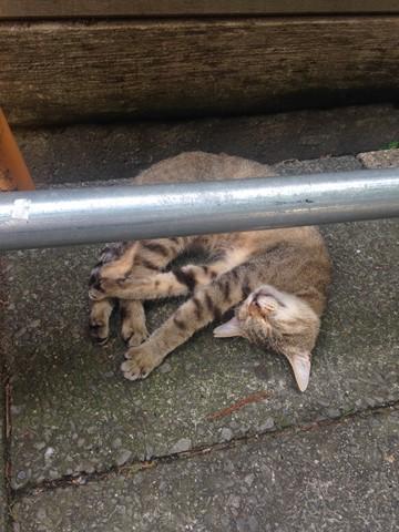 野性を忘れた猫たち (19) (コピー)
