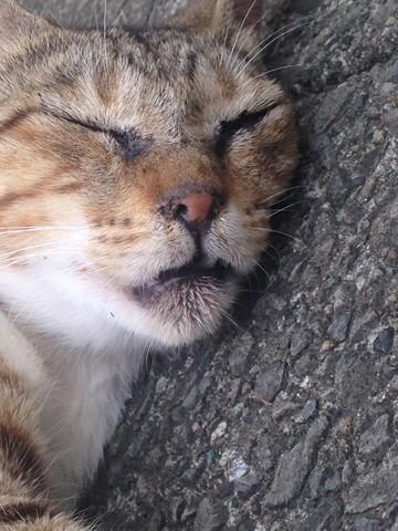 野性を忘れた猫たち (1) (コピー)