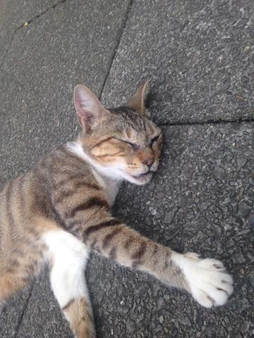 野性を忘れた猫たち (21) (コピー)