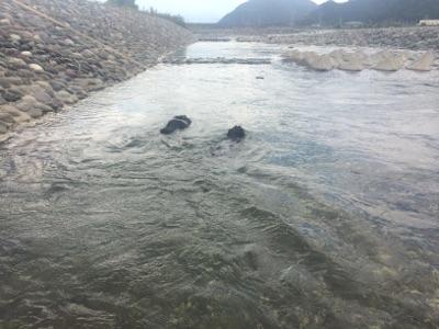 川で塩抜き2015
